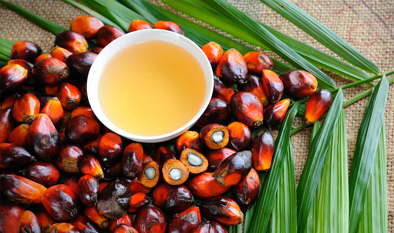 Palm fronds and bowl of palm oil